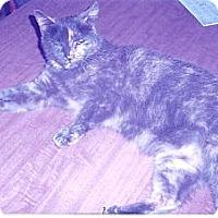 Adopt A Pet :: Betty - Acme, PA