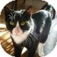 Adopt A Pet :: Moon - Vancouver, BC