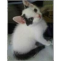 Adopt A Pet :: Nessy - Catasauqua, PA