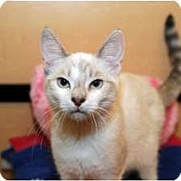 Adopt A Pet :: Asia - Farmingdale, NY