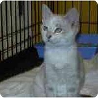 Adopt A Pet :: Jazzy - Arlington, VA