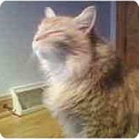 Adopt A Pet :: Chachi - Delmont, PA
