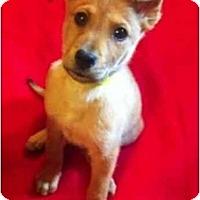 Adopt A Pet :: Elf - Alexandria, VA