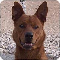 Adopt A Pet :: Alfie - Las Vegas, NV