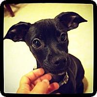 Adopt A Pet :: OTIS - Torrance, CA