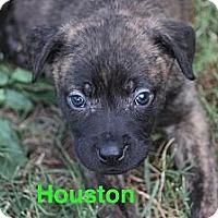 Adopt A Pet :: Houston - Bloomsburg, PA
