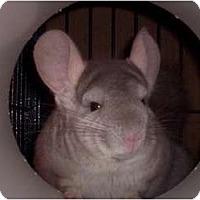 Adopt A Pet :: Gus - Avondale, LA
