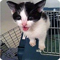 Adopt A Pet :: Posie - Secaucus, NJ