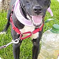 Adopt A Pet :: Jennie $100 this month only - Sacramento, CA