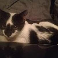 Adopt A Pet :: Olivia - North Plainfield, NJ