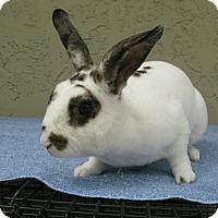 Adopt A Pet :: Earl - Bonita, CA