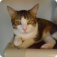Adopt A Pet :: Wrangler - Hamburg, NY