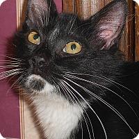 Adopt A Pet :: Dugan - Chattanooga, TN
