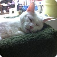 Adopt A Pet :: Noah - Trevose, PA