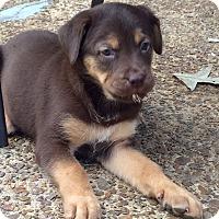 Adopt A Pet :: ARIES - EDEN PRAIRIE, MN