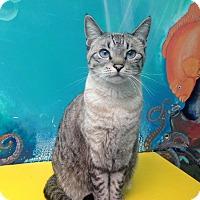 Adopt A Pet :: Sparkles - Newport Beach, CA