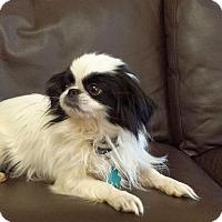 Adopt A Pet :: Ruffles - Alpharetta, GA