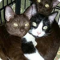 Adopt A Pet :: Twix - Harrisburg, NC