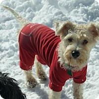 Adopt A Pet :: Princess - Oakhurst, NJ