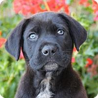 Adopt A Pet :: Edward von Maysie - Thousand Oaks, CA