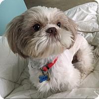 Adopt A Pet :: JAXX - Los Angeles, CA