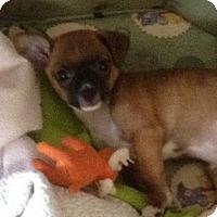 Adopt A Pet :: Tali - Centreville, VA