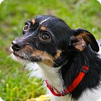 Adopt A Pet :: Millie (WI) - Greenfield, WI