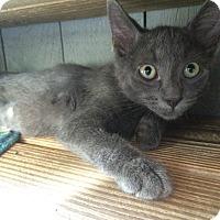 Adopt A Pet :: Sky #1 - Lunenburg, MA