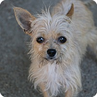 Adopt A Pet :: Grace - Woonsocket, RI