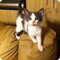 Adopt A Pet :: Janis Joplin - Evansville, IN