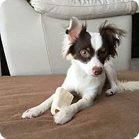 Adopt A Pet :: Latte - Windermere, FL