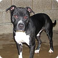 Adopt A Pet :: Hetfield - Ruidoso, NM
