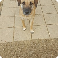 Adopt A Pet :: Betty Sue - Gadsden, AL
