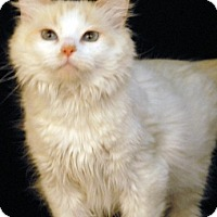 Adopt A Pet :: Sedona - Newland, NC