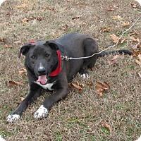 Adopt A Pet :: Jhett - Providence, RI