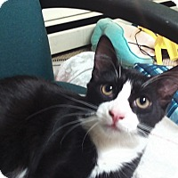 Adopt A Pet :: Newman - wyoming valley, PA