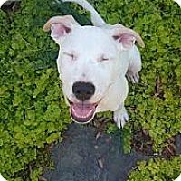 Adopt A Pet :: Pippa - Charlotte, NC