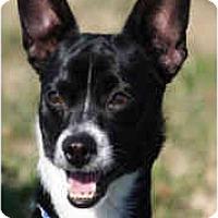 Adopt A Pet :: Rhett-ADOPTED! - kennebunkport, ME