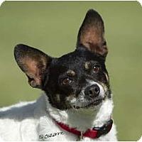 Adopt A Pet :: PEANUT - Phoenix, AZ