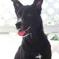 Adopt A Pet :: Reba - kennebunkport, ME