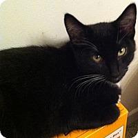 Adopt A Pet :: Riot - Brea, CA