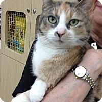 Adopt A Pet :: Evanthia - Troy, OH