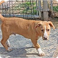 Adopt A Pet :: Paw Paw - Pending! - kennebunkport, ME
