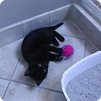 Adopt A Pet :: Sophie - Harrisburg, NC