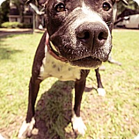 Adopt A Pet :: Alden - New orleans, LA