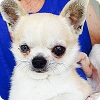 Adopt A Pet :: Willie - St. Petersburg, FL