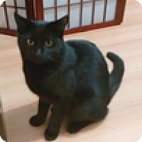 Adopt A Pet :: Trajan - Vancouver, BC