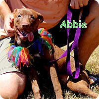Adopt A Pet :: Abbie - Charlemont, MA