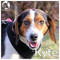 Adopt A Pet :: Kyte - Novi, MI