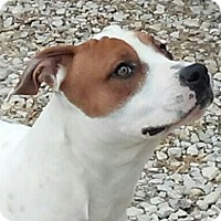 Adopt A Pet :: Frankie - Huntingburg, IN